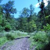 Lick Creek Forest-014