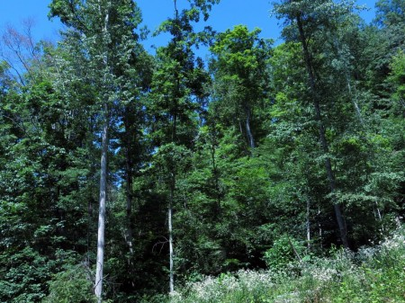 Lick Creek Forest-015