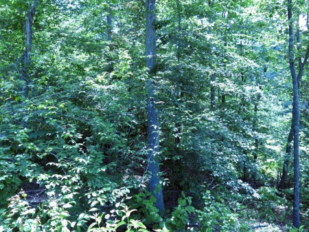 Lick Creek Forest-016