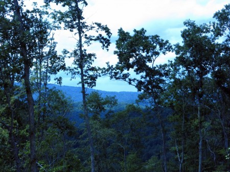 Lick Creek Forest-018