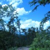 Lick Creek Forest-019