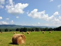 THE GUY FARM at WAITEVILLE - 57 +/- ACRES