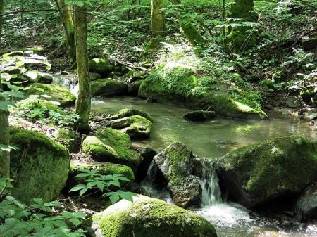 Big Creek Forest-001