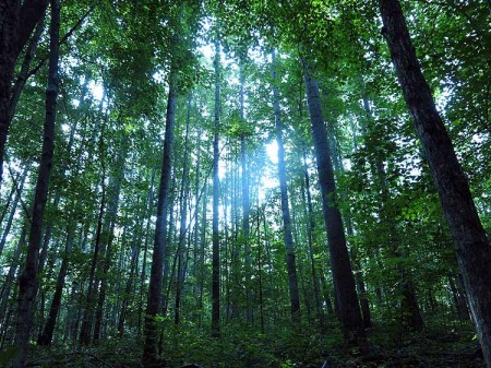 Big Creek Forest-002