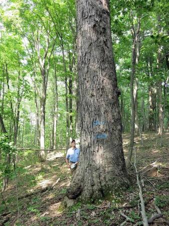 Big Creek Forest-004