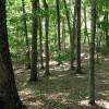 Big Creek Forest-005