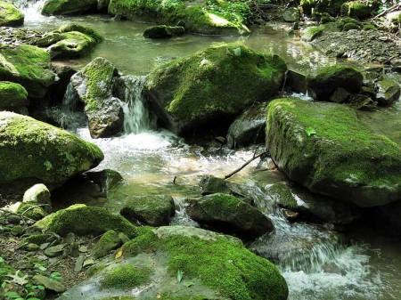 Big Creek Forest-006