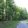 Big Creek Forest-008