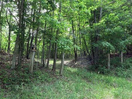 Big Creek Forest-009