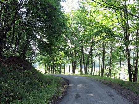 Big Creek Forest-010