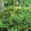 Big Creek Forest-011