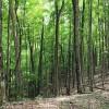 Big Creek Forest-012