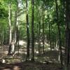 Big Creek Forest-013