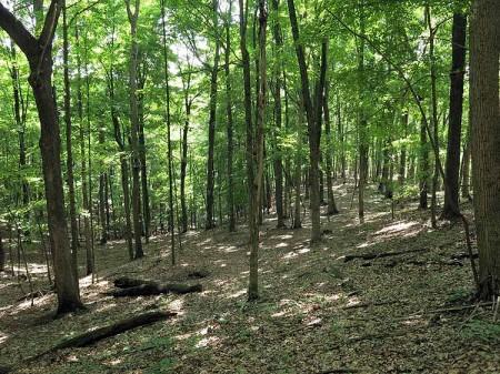Big Creek Forest-014