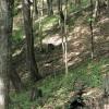 Big Creek Forest-015