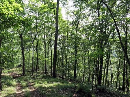 Big Creek Forest-016