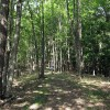 Big Creek Forest-017