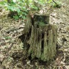 Big Creek Forest-018