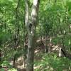 Big Creek Forest-019
