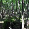 Big Creek Forest-021