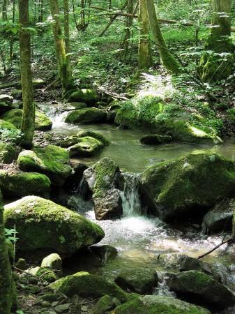 Big Creek Forest-022
