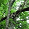 Big Creek Forest-023