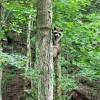 Big Creek Forest