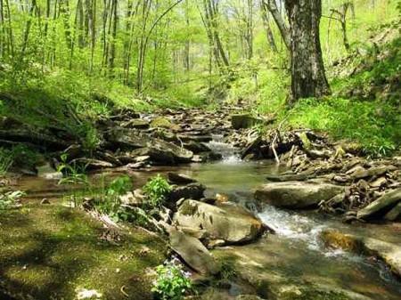 Stony Creek2