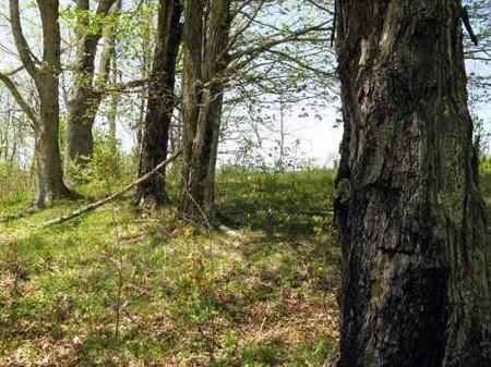 Stony Creek28