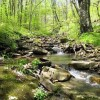 Stony Creek36