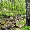 Stony Creek38