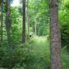 Stony Creek6
