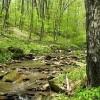 Stony Creek8