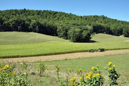 Toler Farm15