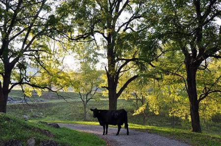 Toler Farm17