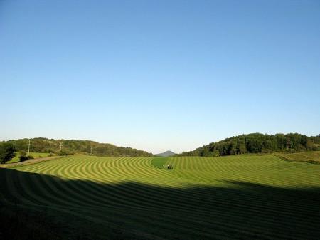 Toler Farm2