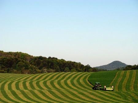Toler Farm26