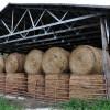 Toler Farm39