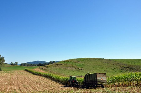 Toler Farm48