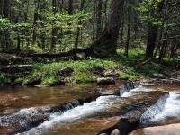 PANTHER CREEK CABINS - 37 +/- ACRES