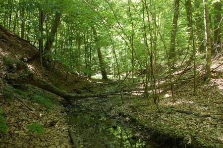 Green Valley4