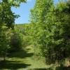Green Valley7