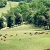 09 Highland Green Farm Tour