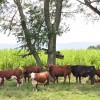 11 Highland Green Farm Tour