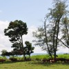 12 Highland Green Farm Tour