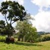 14 Highland Green Farm Tour