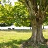 20 Highland Green Farm Tour