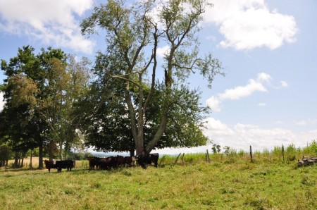 54 Highland Green Farm Tour