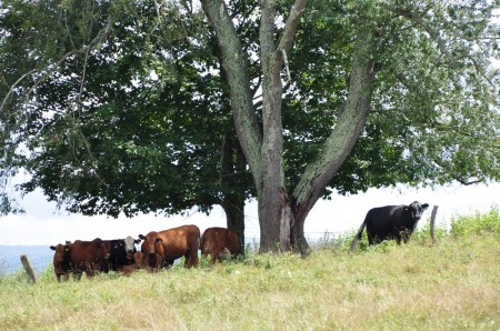 55 Highland Green Farm Tour