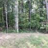 woodedlot